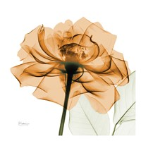 Copper Rose White Leaves Fine Art Print