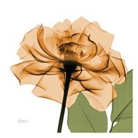 Copper Rose Green Leaves Fine Art Print