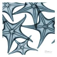 Starfishes Framed Print