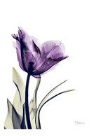 Tulip Dream Fine Art Print
