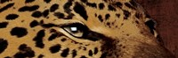 Leopard Eyes Fine Art Print