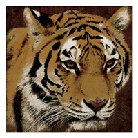 Tiger 2 Framed Print