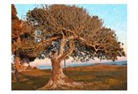 The One Tree Fine Art Print