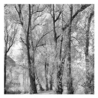 Woods III Fine Art Print