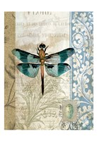 Dragonfly Blue Framed Print