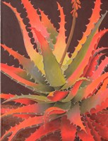 Sunset Agave Fine Art Print