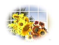 Sunflower 11 Fine Art Print