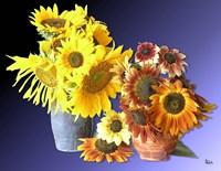 Sunflower 16 Fine Art Print