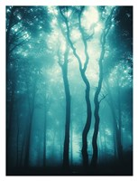 Blue Light Woods Fine Art Print