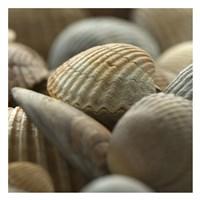Shells 2 Fine Art Print