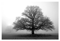 Tree in Mist 2 Fine Art Print