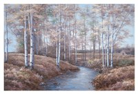 Birch Creek Fine Art Print