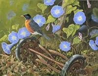 American Robin Fine Art Print