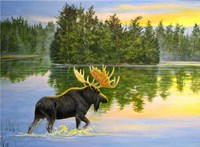 Wilderness Lake Moose Fine Art Print