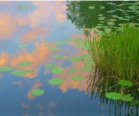 In Honor of Monet Fine Art Print