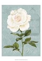 Cream Rose I Framed Print