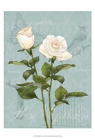 Cream Rose II Framed Print