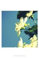 Summer Blossom I Fine Art Print