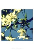 Summer Blossom II Fine Art Print