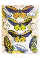 Butterfly Map I Framed Print