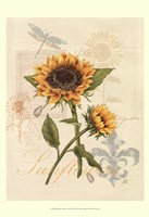 Romantic Sunflower II Fine Art Print