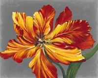 Tulip Portrait I Framed Print