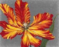 Tulip Portrait II Framed Print