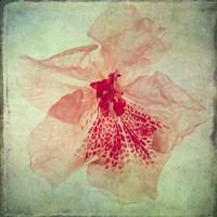 Lush Vintage Florals VI Fine Art Print