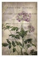 Favorite Flowers IV Framed Print