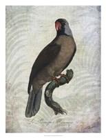 Parrot Jungle I Framed Print
