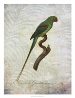 Parrot Jungle III Framed Print