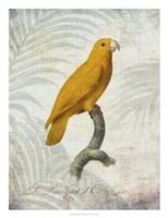 Parrot Jungle V Framed Print