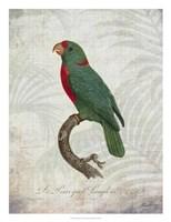Parrot Jungle VI Framed Print