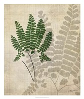 British Ferns II Framed Print