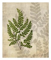 British Ferns VI Framed Print