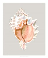 Pink Murex Framed Print