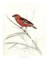Rustic Aviary IV Framed Print