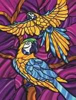 Parrot A Fine Art Print