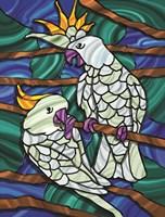 Parrot C Fine Art Print