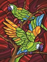 Parrot D Fine Art Print