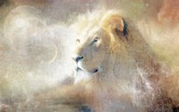Lion Dust of Dreams Fine Art Print