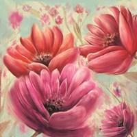 Pink Poppy Bloom Fine Art Print