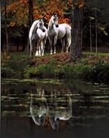 Autumn's Reflection Fine Art Print