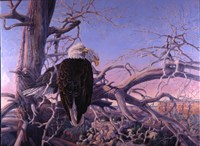 Bald Eagles Fine Art Print
