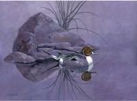 Pintail Reeds Fine Art Print