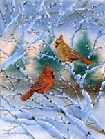 Sunset Cardinals Fine Art Print