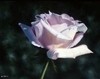 Sterling Fine Art Print
