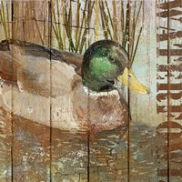 Open Season Mallard Fine Art Print