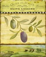 Olive Grove Tuscana Framed Print