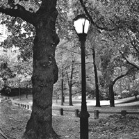 A Light in Central Park Fine Art Print